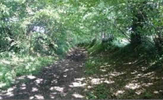 Chemin montois